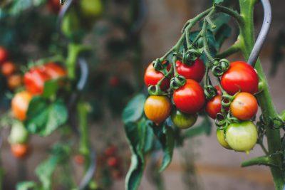kraanwater zuiveren en pesticiden in voeding